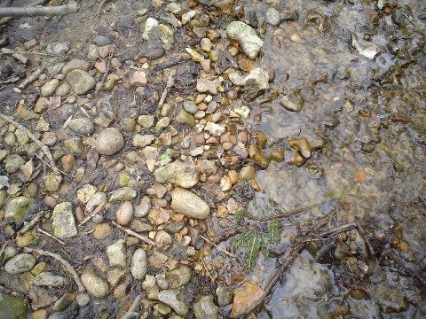 A mix of well rounded pebbles in the stream-bed, Local flints and far travelled sandstones and 'Bunter' pebbles from the Midlands. These are typical of the Quaternary age, Winter Hill gravels which underlay the areodrome.
